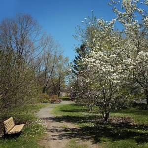 What to do in Montréal in Spring: walking at parc Jean-Drapeau
