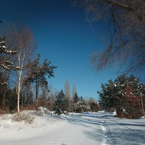 What to do in Montréal in Winter: walking at parc Jean-Drapeau